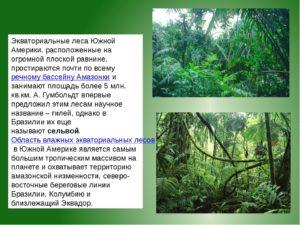 влажные экваториальные леса Южной Америки 7 класс