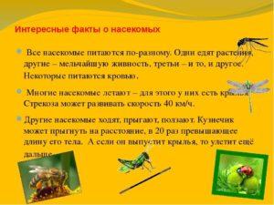 Проект по биологии 7 класс по теме Интересные факты о насекомых.
