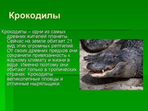 Проектная работа А кто такие крокодилы? (1 класс)