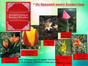 Красная книга Казахстана (растения)