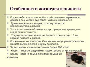Проект по биологии Кошки - домашние животные