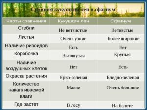 Сравнение мхов (сфагнума и кукушкина льна) . Общие черты и отличия
