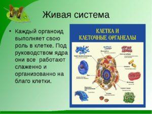 Конспект урока по биологии на тему Живые клетки (5 класс)