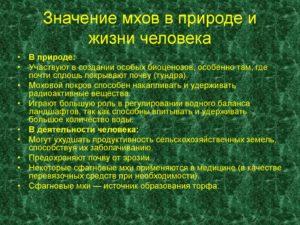 Значение мхов в природе и в жизни человека