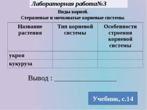 Лабораторная работа № 2 по биологии на тему  Виды корней, стержневые и мочковатые корневые системы (6 класс)