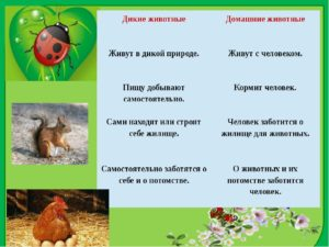 Информационный проект по теме Дикие и домашние животные 3 класс (окружающий мир)