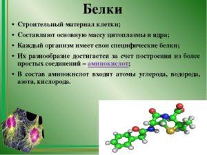Сообщение по биологии на тему  Белки, их строение и роль в клетке