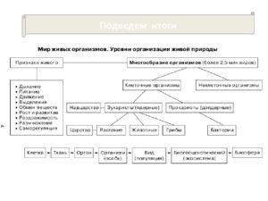 Проверочная работа Систематика. Уровни организации живой природы 7 класс