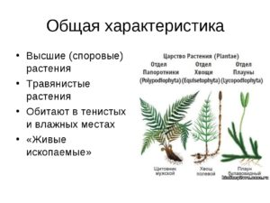Тема: Общая характеристика папоротников, хвощей, плаунов как высших споровых растений. (6 класс)