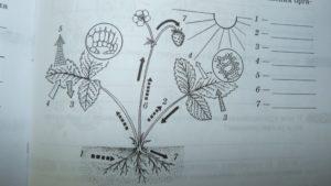Олимпиада по биологии (6 класс)