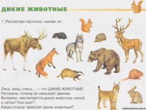 Конспект занятия Дикие животные