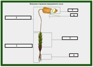 Лабораторная работа по биологии Особенности строения и размножение мхов (7 класс)
