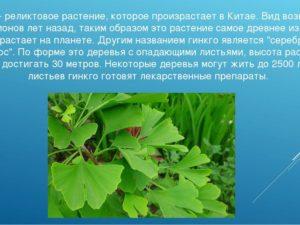Проект по биологии Реликтовые растения