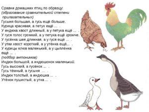 Конспект открытого логопедического занятия для подготовительной к школе группы на тему: Домашние птицы